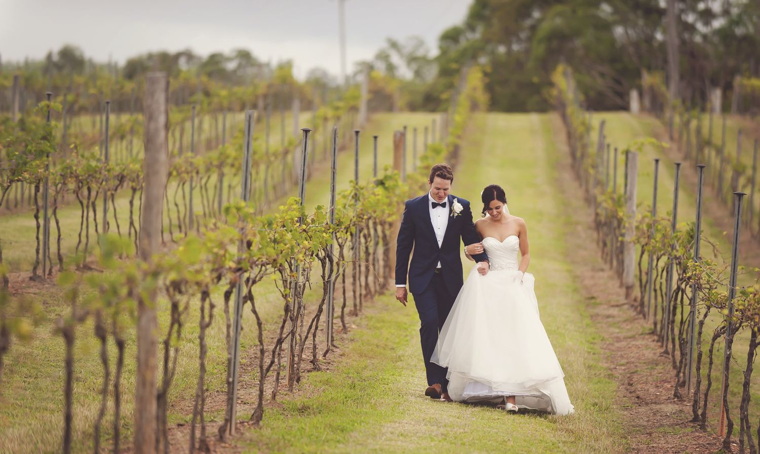 wedding couple having photos in the vineyard at Sirromet Winery